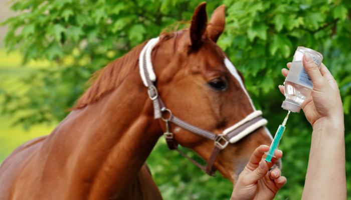 Vaccin cheval